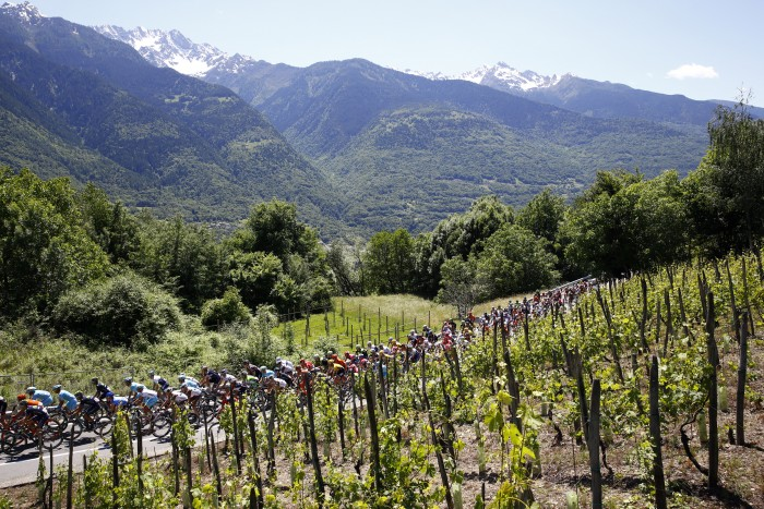 Stage 17 featured a scenic route that included several vineyards.
