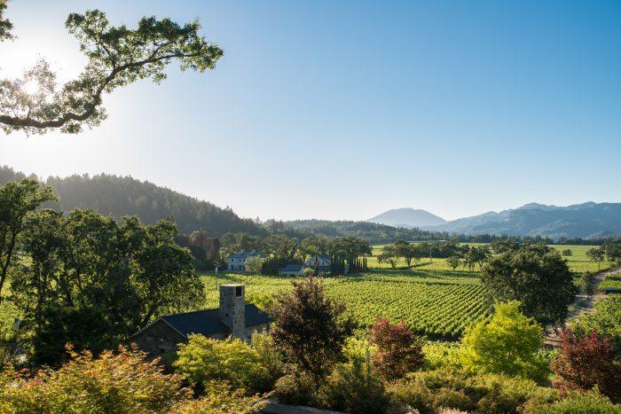 trinchero-vineyard-view